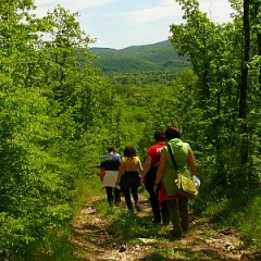 walking-route-forest-strandja-bulgaria